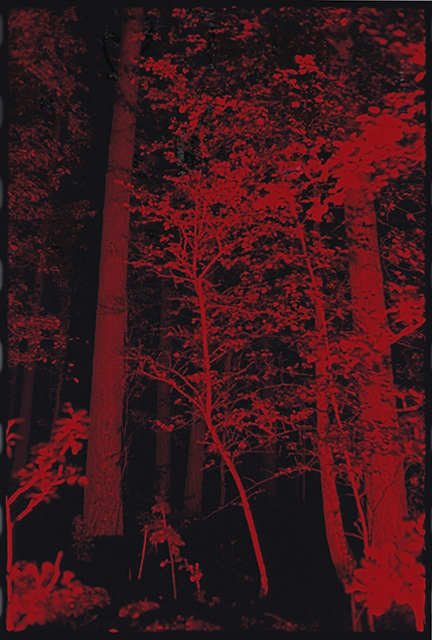 Röd natur - Klicka för att byta till perspektivbild.