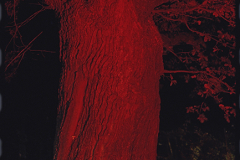 Röd natur